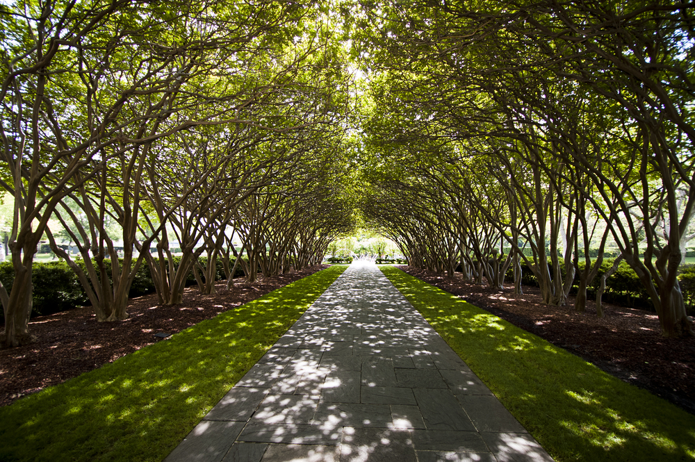 Pathway at the Dallas Arboretum
