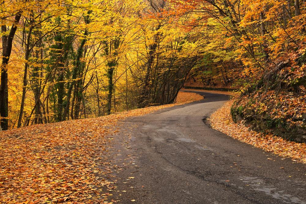 Road among fall trees