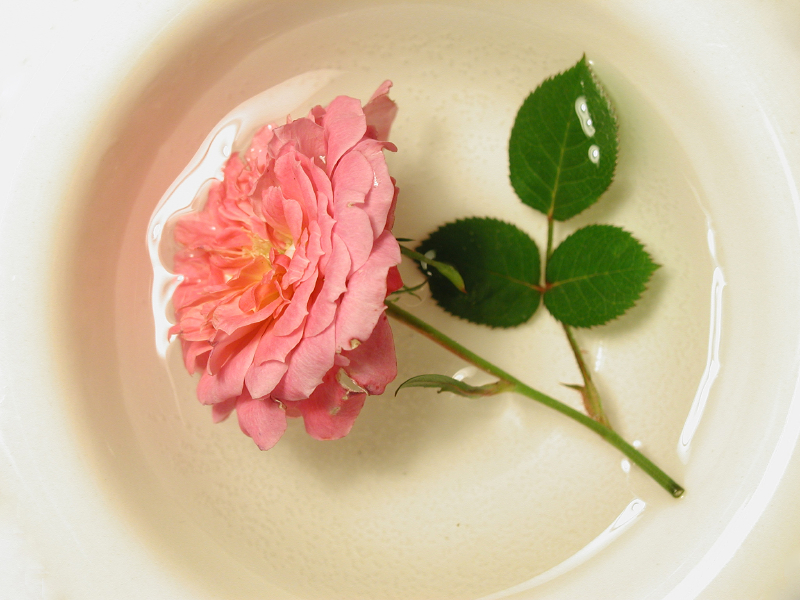Bowl of rose water with beautiful pink tea rose floating in it