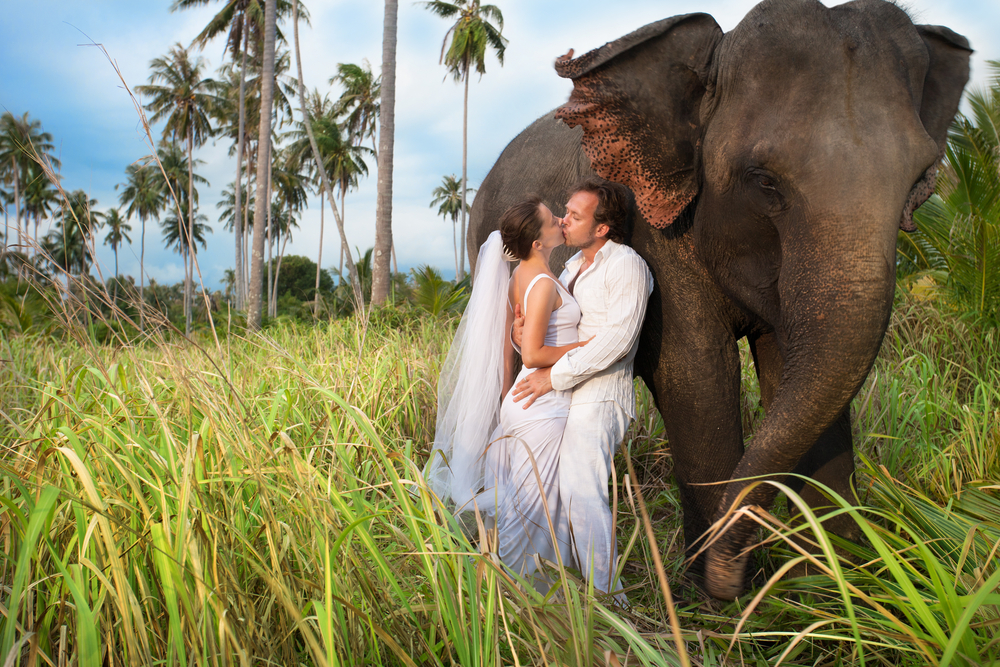 Couple celebrate their wedding besides an elephant.