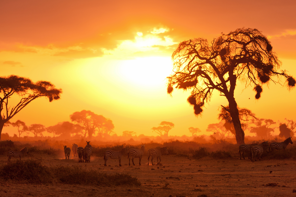 Sunset views in Masai Mara, Kenya