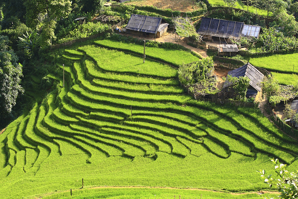 Rice terraces in Banaue, Philippines.