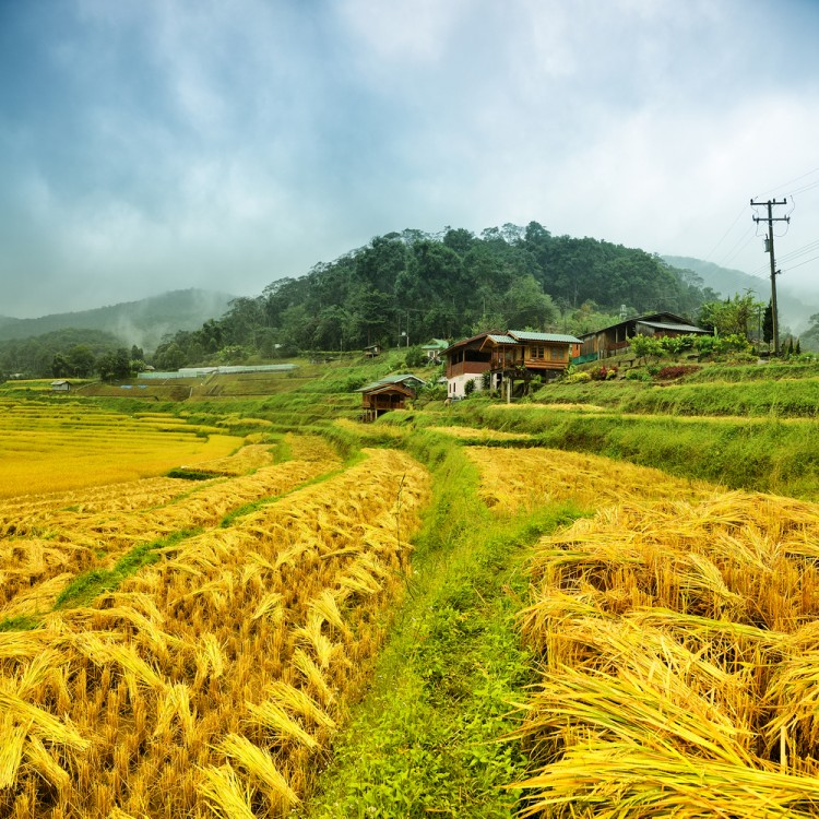 Beautiful farm and homestay in Thailand.