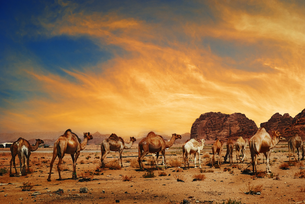Desert landscapes in the middle east