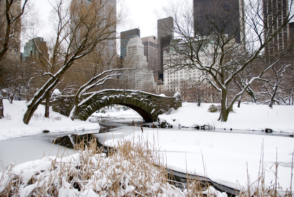 Central Park in winters.