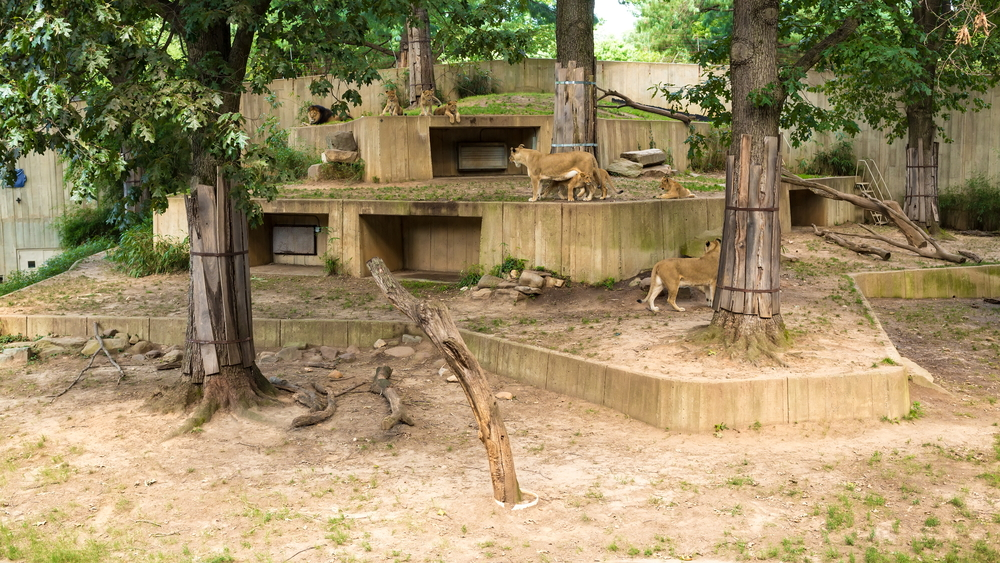 Lion enclosure at the Smithsonian National Zoo