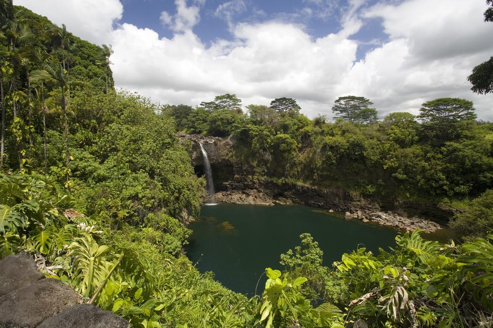 Kona Cloud Forest Sanctuary