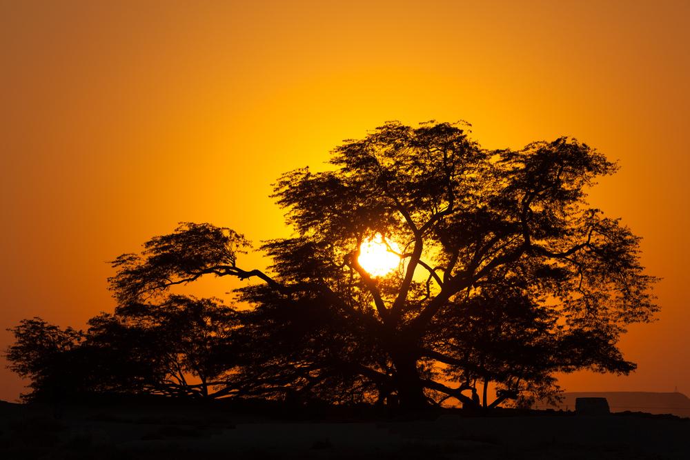Bahrain's Tree of Life