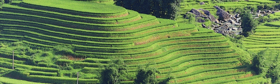 Rice Terraces of the Philippines