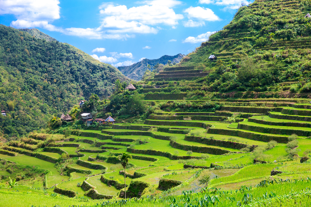 The Rice Terraces of the Philippines