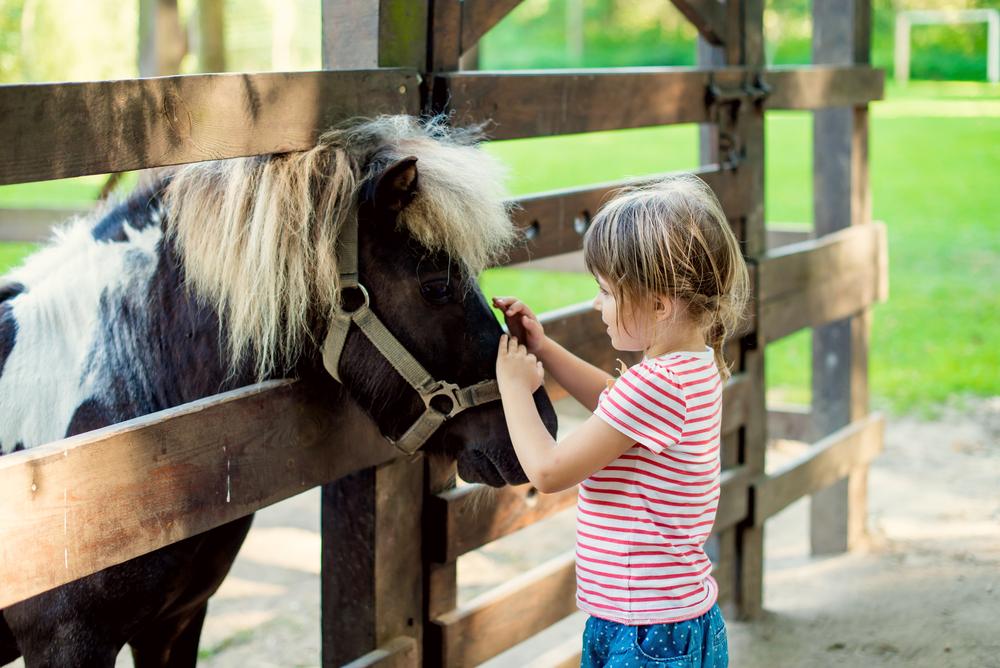Girl petting donkey
