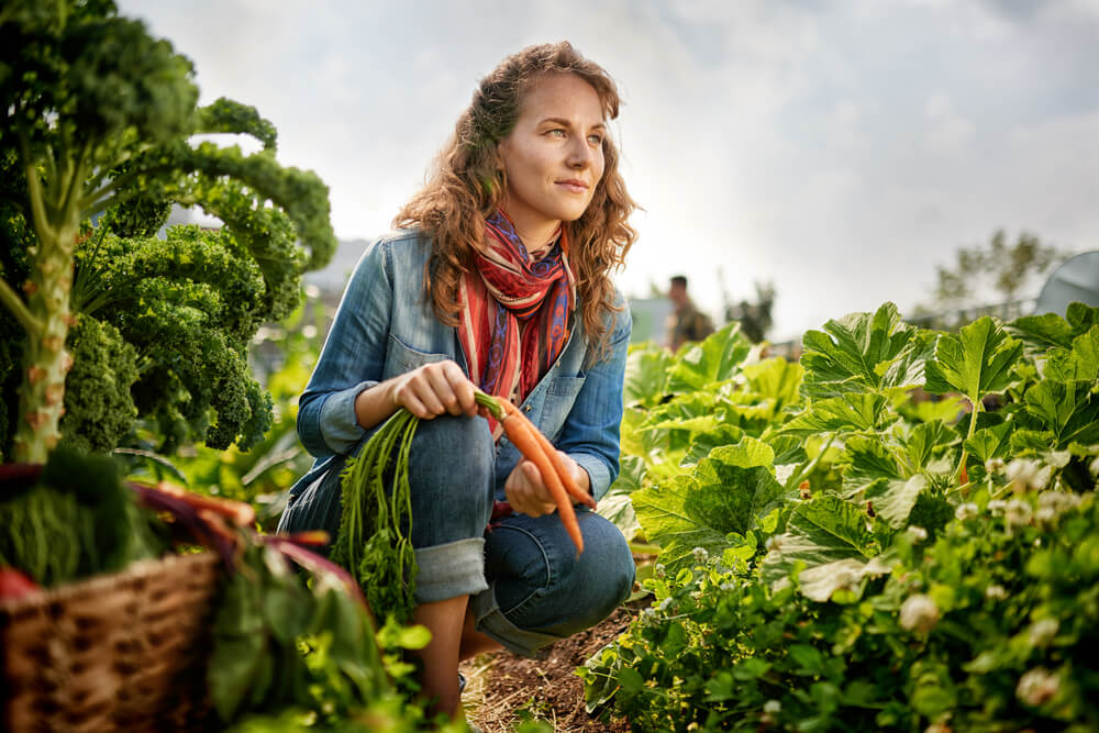 Woman picking carrots in farm