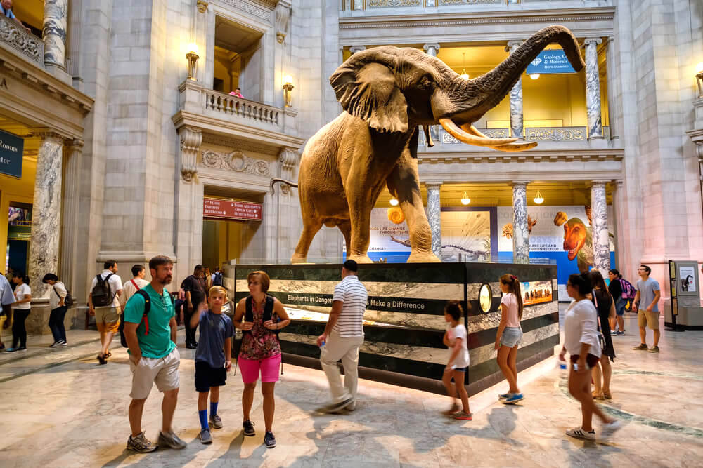 Visitors in the main hall of the Natural History Museum, Washington D.C.