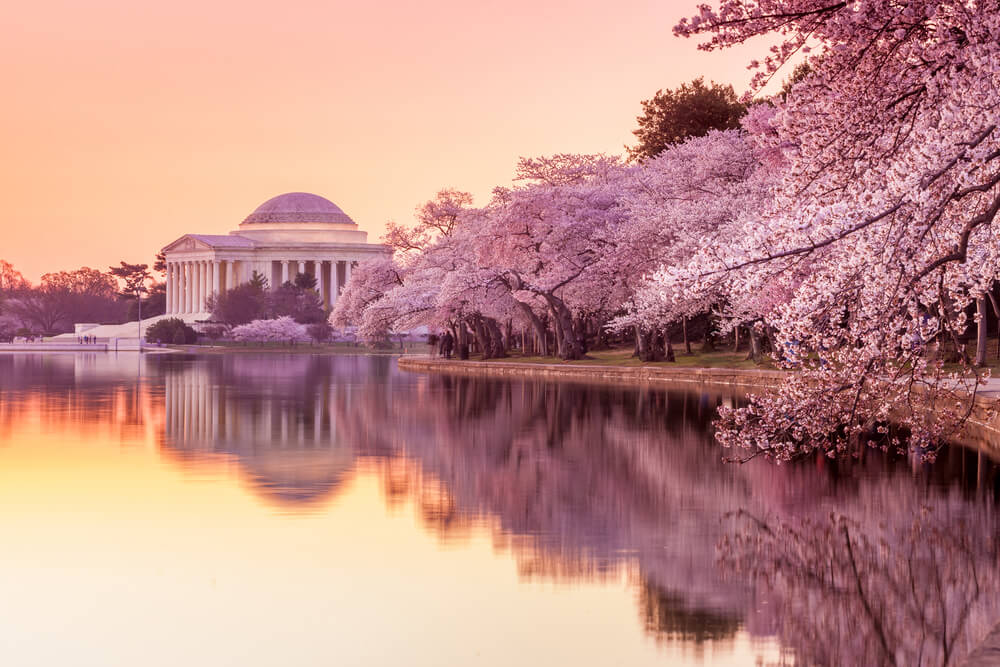 Jefferson Memorial during the National Cherry Blossom Festival
