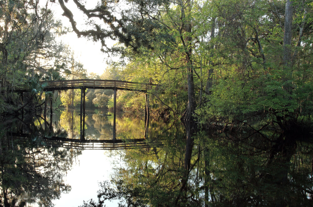 The scenery at Hillsborough River State Park in Tampa, Florida